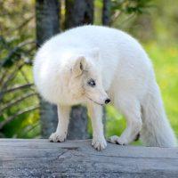 arctic-3456752_640