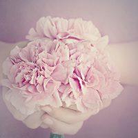 flowers-1359317_640